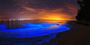 maldivas mar de estrellas