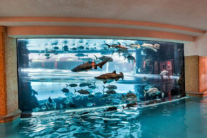 Piscina con tiburones las vegas