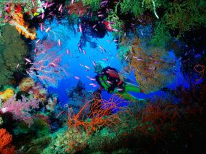 Cancún arrecife